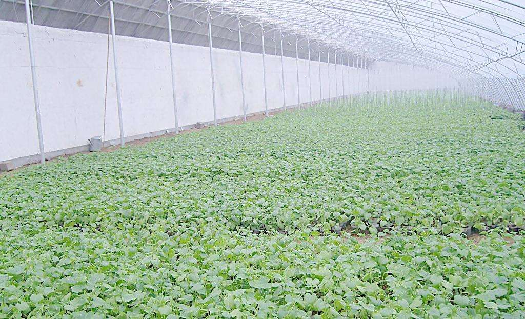 山东筹集1.84亿元财政资金 推动特色农业集群发展
