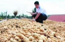 1-11月临沂市出口花生及制品15.94吨
