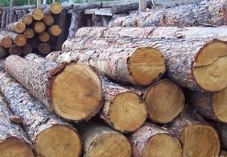 日照口岸木材年进口量达历史最高 今年已进口613万立方米
