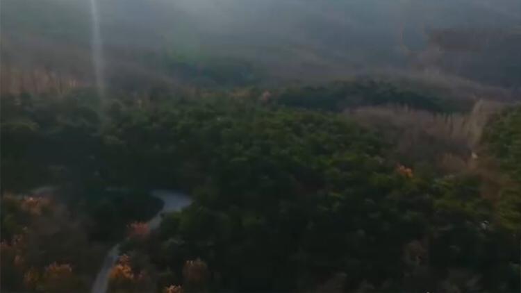 新时代 新气象 新作为 | 原山林场坚持这六个字 做到不砍树也能致富