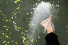 济南:今年将继续组织骨灰撒海活动 集中安葬100名逝者