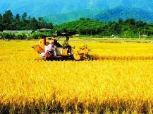 山东2020年超半数县区实现农业现代化 农药化肥用量减10%