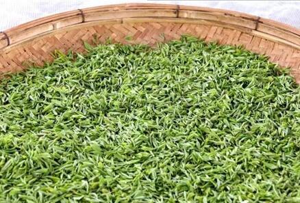 日照圣谷山茶场率先炒制2017年珍贵明前茶