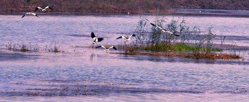 """东明黄河湿地公园荣膺""""国家湿地公园""""称号"""