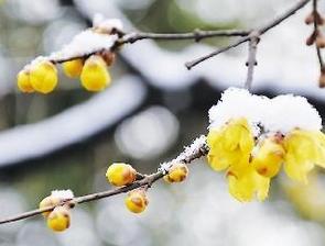 组图:山东各地最美雪景大比拼,简直美得不像话