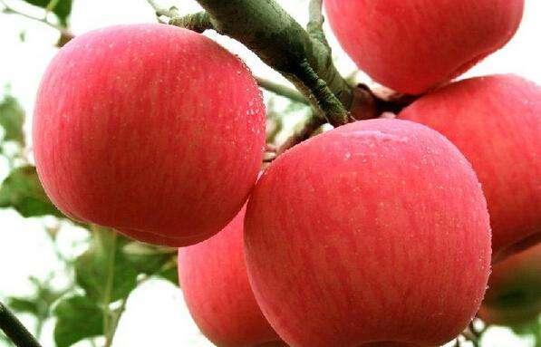 """山东:""""绿色发展""""推进水果产业新旧动能转换"""