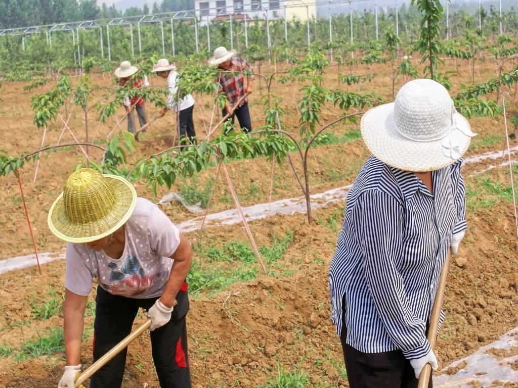 山东出台家庭农场省级示范场认定管理暂行办法