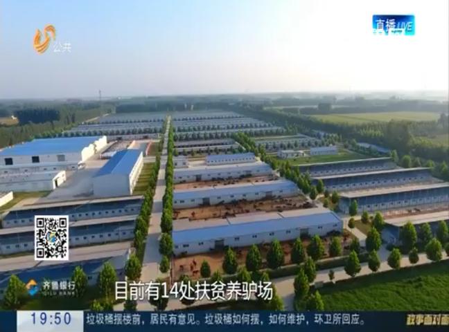 专访东阿县委书记雷霞:巩固扶贫成果 因地施策产业扶贫