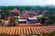 山东新增30个生态文化村,快看看有你们村吗 !