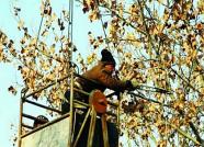 """20万吨防冻水""""喂饱""""绿化苗木 潍坊市区""""树宝宝""""安心过冬"""