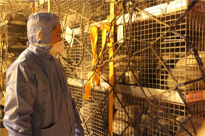 山东口岸首次进口种用北极狐 提升现代养殖业发展水平