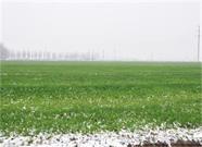 大雪盖起厚棉被!威海农作物生长益处多