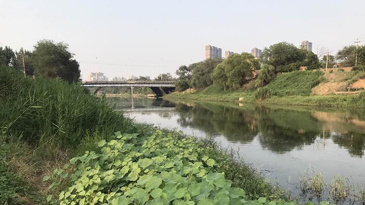 活起来,美起来!结合生态和产业发展,德州将深挖运河文化
