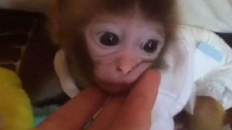 98秒  网上买猴转账3000元被拉黑 专家:这是违法的!
