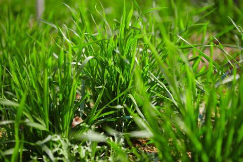 山东大部分农田土壤墒情适宜 小麦处于越冬期