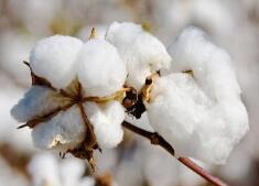 2017年度潍坊检验检疫局助进口棉花企业索赔超百万美元