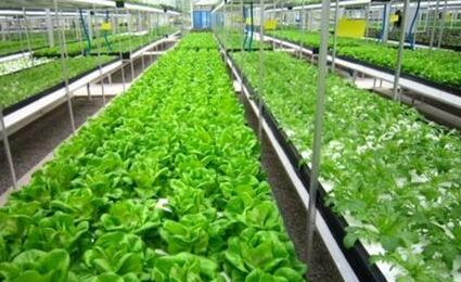 """山东加快发展农业""""新六产"""" 重点塑造四种新业态"""