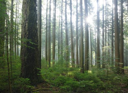 山东:森林覆盖率17.51% 国家级湿地公园数量全国第一