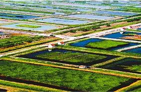 山东加快建设半岛创新示范区和黄三角农业高新产业示范区