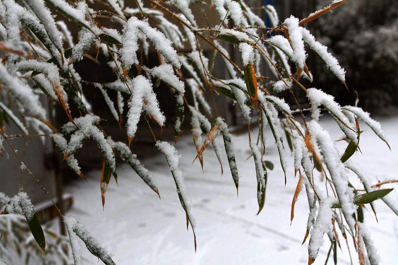 海丽气象吧|山东明后天将迎降雪天气 集中在下午至早晨