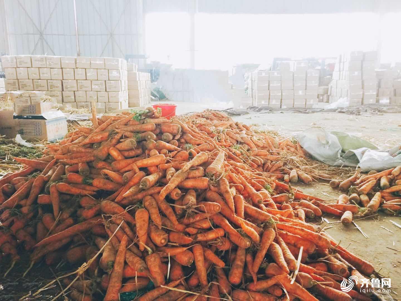 京东物流助力 菏泽600万斤滞销胡萝卜变热销网货