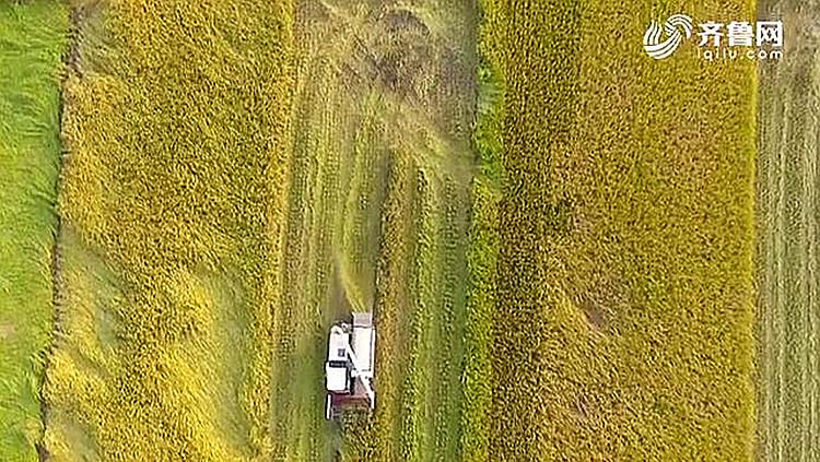 【两会新观察】发挥农业大省优势 开拓乡村振兴新途径