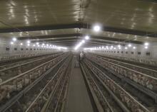 他自筹资金3600万,建起了可复制新型高科技养鸡场