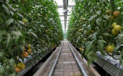 """兰陵万亩""""上海外延蔬菜基地""""年交易量近200万吨"""