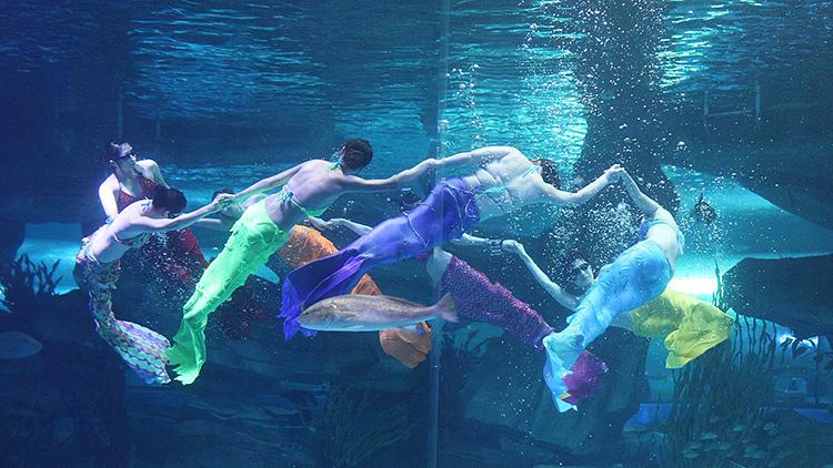 """新春走基层丨带着感情演绎的""""美人鱼""""赵爱娟:自己就是童话里的人"""
