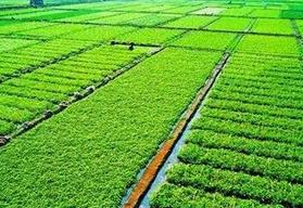 山东严守耕地保护红线 2020年不得少于1.1亿亩