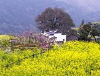 夜读|春天住进我的村庄