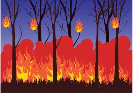 山东接连发生几起森林火情 省森防止发春节火灾预警