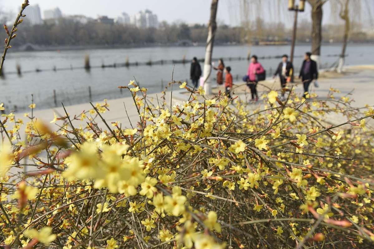 济南大明湖畔绿油油 说好的春天你来啦!