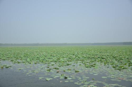 湖泊、水库有了湖长,山东9月底前全面建立湖长制