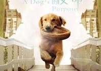 """山东美术馆""""汪星人电影月""""播放预告 爱狗的你别错过"""