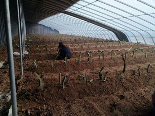 山东将开展贫困农场扶贫工作作风专项治理 明年3月底结束