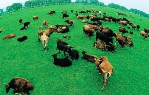东营:重点发展休闲观光畜牧业 与旅游关联规划