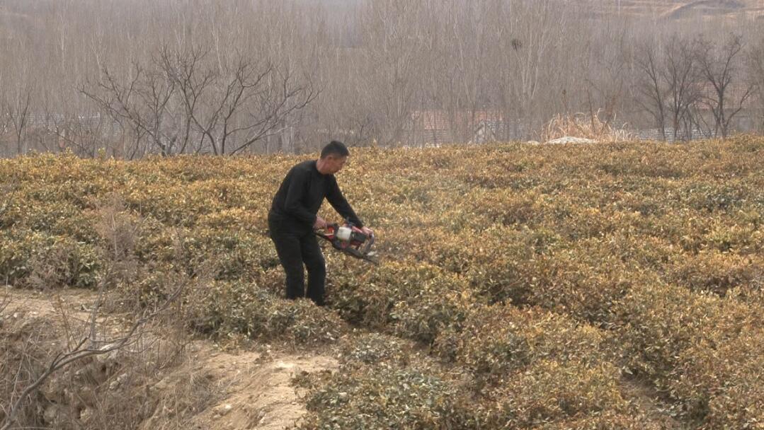 沂蒙山区穷山沟劣势变优势 发展茶园效益可观