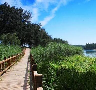 2020年潍坊将全部消灭宜林荒山 新造林10万亩