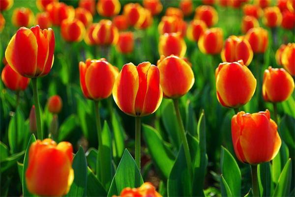快收藏!又到一年赏花季,威海赏花全攻略!