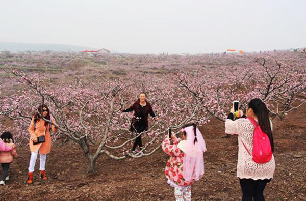 第七届山东·沂水(泉庄)桃花节4月1日花开待你来