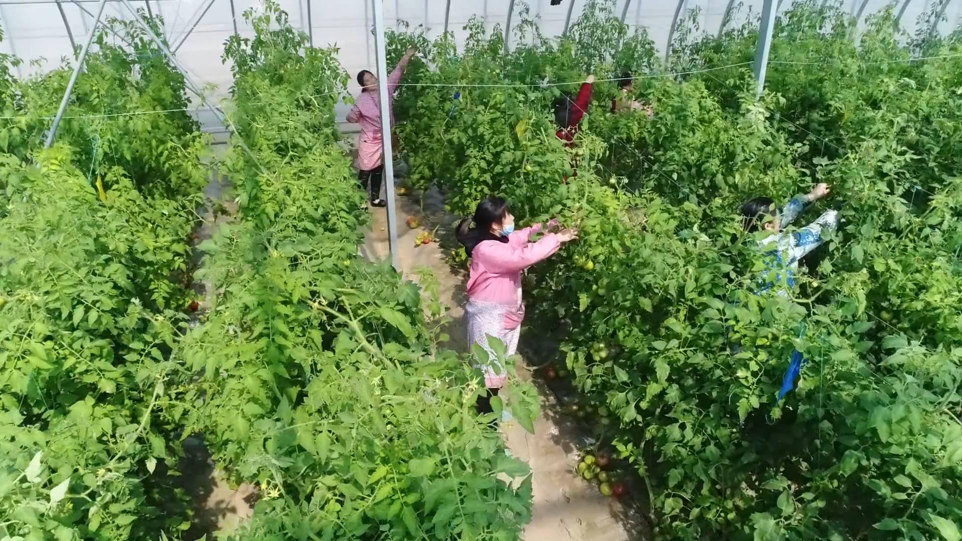 菏泽五里墩实施乡村振兴 村民年人均纯收入超过5万