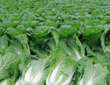 山东发布蔬菜种植时间表 几月种什么菜一看就明白!