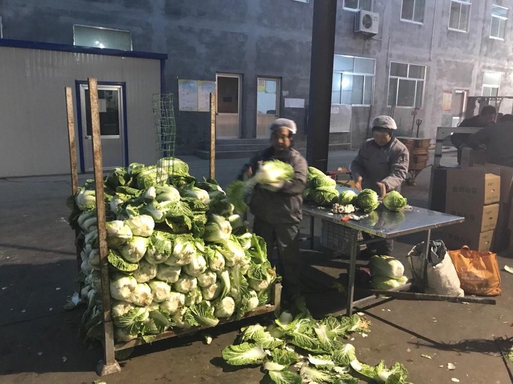 严苛标准倒逼质量提升 山东蔬菜出口日本增长翻倍