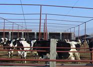 """智慧养殖融合创新 新泰打造畜牧业下一片""""蓝海"""""""