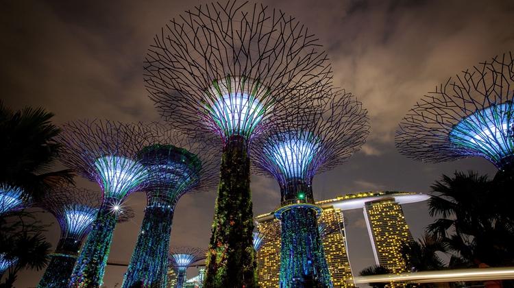 植树节,带你看看世界各地树的艺术范儿,太美了!