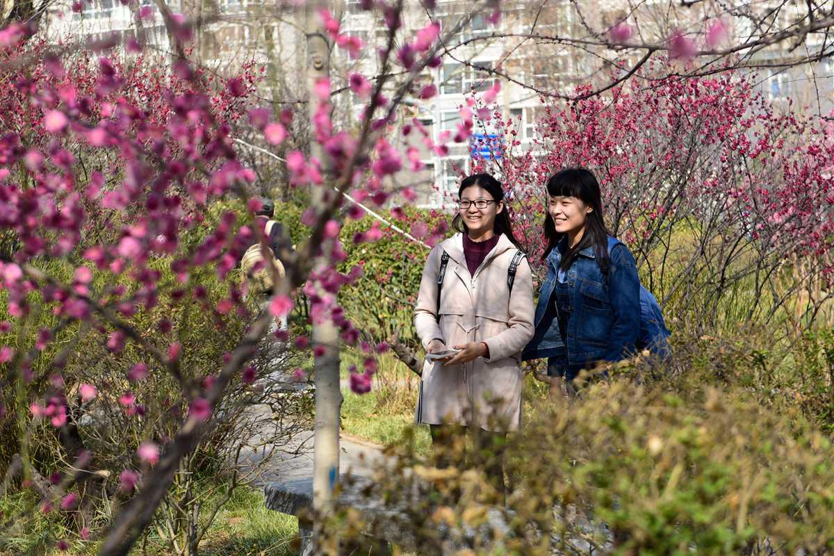 """阳春三月花绽放 看学子头上""""那抹红""""春景醉人"""