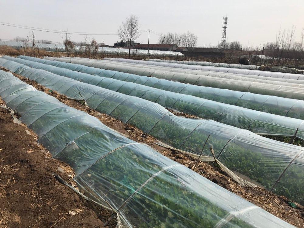全国第一!山东安丘全流程管控蔬菜产品 出口50多个国家和地区