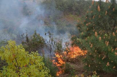 费县薛庄镇发生一起山林火灾 事故原因调查中