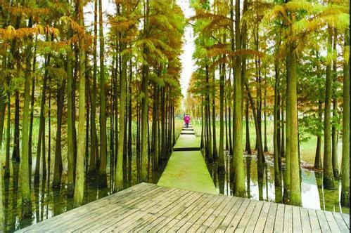 """""""生态齐河·醉美森林""""项目启动 ,每年可涵养水源39万立方米"""